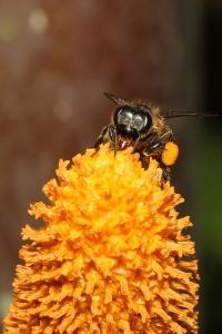 wild-honey-bees-1432373-2-m